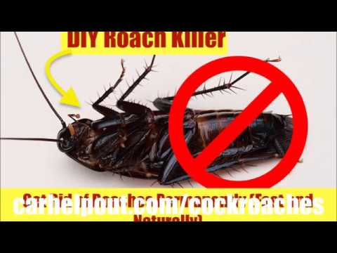 how to get rid of cockroaches Killer bait home remedies